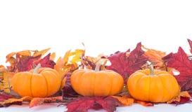 Three Mini Pumpkins Stock Images