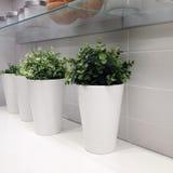 Three modern white vases in a row Stock Photos