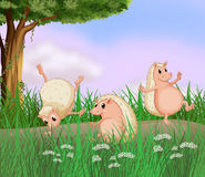 Three molehogs playing Royalty Free Stock Photography