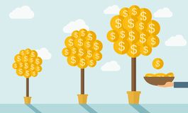 Three money trees Royalty Free Stock Photo