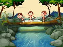 Three monkeys crossing the river Royalty Free Stock Photography