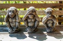 Three monkeys. With Dharma puzzle Royalty Free Stock Photo