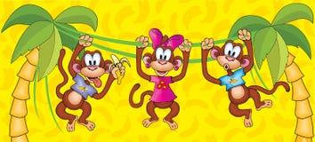 Three monkeys hanging on vines. symbol 2016. Stock Image