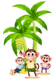 Three monkeys near the banana plants Stock Photography
