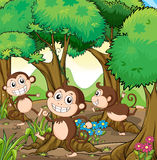 Three monkeys playing at the forest Royalty Free Stock Photo