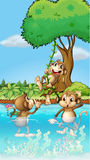 Three monkeys playing. Illustration of three monkeys playing Stock Image