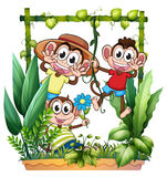 Three monkeys playing Royalty Free Stock Image