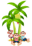Three monkeys under the banana plant Royalty Free Stock Image