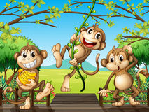 Three monkeys at the wooden bridge Royalty Free Stock Photo