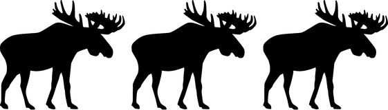 Three moose elk. Silhouette of moose three in a row Royalty Free Stock Photo