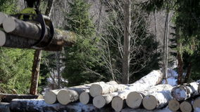 Three more medium sized logs added to the pile of logs Stock Photography