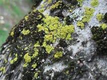 Three moss Stock Photos