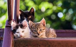 Three motley kittens look into the camera on a blurred natural background.  stock image
