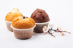 Three muffins with apricot branch isolated. On white background Royalty Free Stock Photo