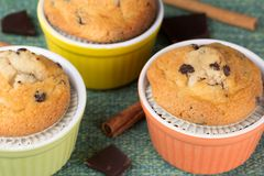 Three muffins with cinnamon sticks and chocolate. In the beautiful cups Royalty Free Stock Images