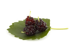Three mulberry berries. On leaf isolated stock photo