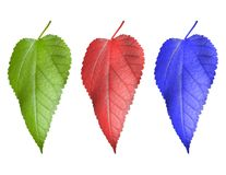 Three multi-coloured leaf Royalty Free Stock Images