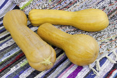 Three muscat pumpkin Stock Image