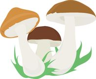Three mushroom Stock Photos