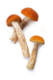 Three Mushrooms Stock Photos