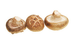 Three mushrooms. Isolated against white Stock Photo