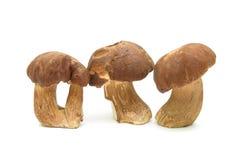 Three mushrooms close up isolated on white background. Royalty Free Stock Photos