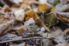 Three mushrooms in the forest stock image