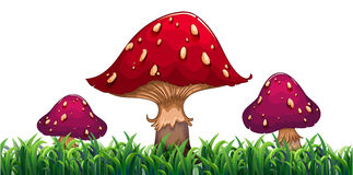 Three mushrooms Royalty Free Stock Photography