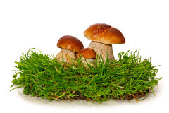 Three Mushrooms isolated on a white background. Royalty Free Stock Photos