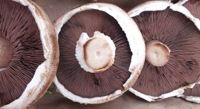 Three mushrooms in a row Royalty Free Stock Photos