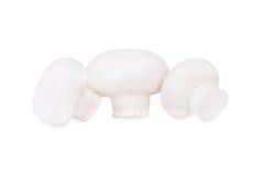 Three mushrooms Stock Images