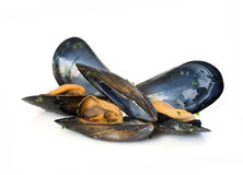 Three mussels Stock Image