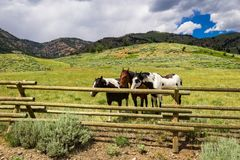 Three Mustangs. Three mustang horses behind a fence in Wyoming royalty free stock photo