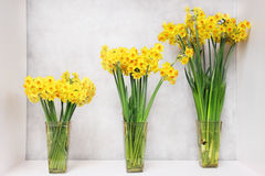 Three narcissus in vase Royalty Free Stock Image
