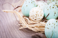 Three natural blue Easter eggs in a basket Stock Image