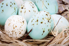 Three natural blue Easter eggs in a basket Royalty Free Stock Photo