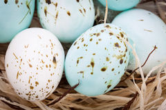 Three natural blue Easter eggs in a basket Royalty Free Stock Photos