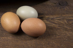 Three natural eggs. A trio of organically raised brown and green eggs, fresh from the farm Royalty Free Stock Photo