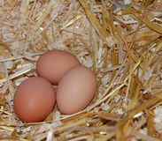 Three natural organic eggs Royalty Free Stock Photography