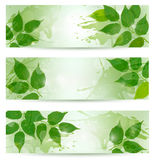 Three nature background with green spring leaves. Vector illustration Royalty Free Stock Photos