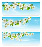 Three nature banners with blossoming tree brunch and blue sky. Vector illustration Stock Image