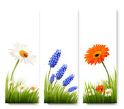Three nature flower banners. Royalty Free Stock Photo