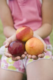Three nectarines in child hands Stock Photography