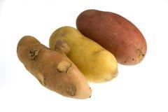 Three new fingerling potatos isolated on white Stock Images