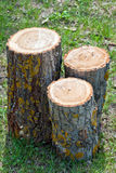 Three new stumps Royalty Free Stock Photos
