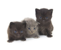 Three newborn kittens on white Royalty Free Stock Photos
