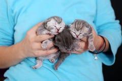 Three newly born kittens Stock Photography