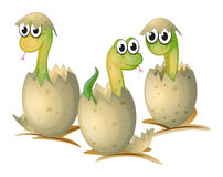 Three newly cracked eggs of a snake Stock Photography