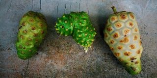 Three Noni Fruits stock image
