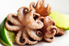 Three octopus and a slice of lime close-up on a white background Royalty Free Stock Images